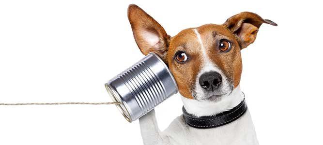 wil je weten hoe je het beste een gesprek kan starten, een goeie openingszin is cruciaal